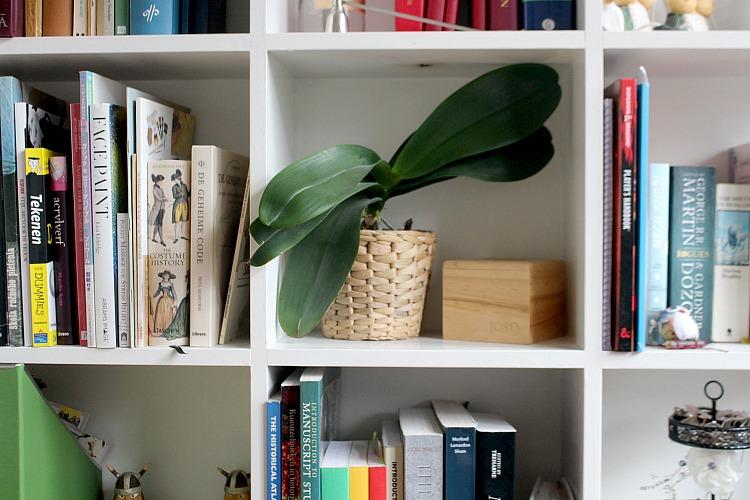 indoor-plants-3