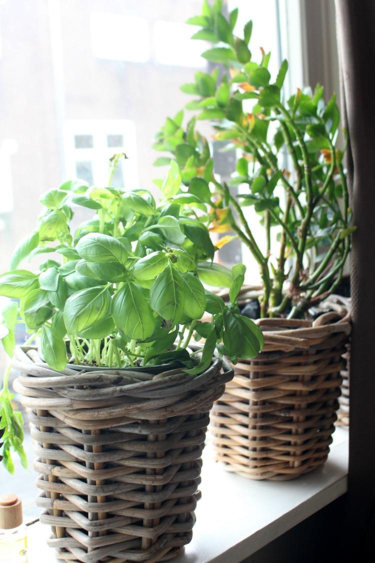 indoor-plants-4