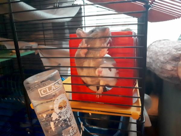We Got Baby Rats! | Loepsie's Life